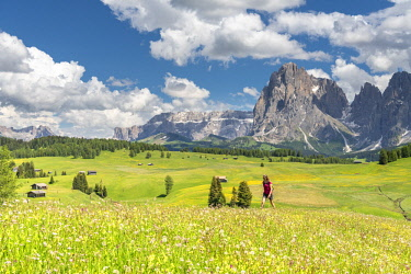 CLKMK92963 Alpe di Siusi/Seiser Alm, Dolomites, South Tyrol, Italy.  (MR)