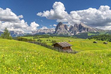 CLKMK92965 Alpe di Siusi/Seiser Alm, Dolomites, South Tyrol, Italy.