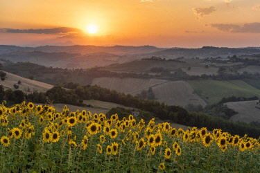 CLKMK94412 Sant' Isidoro, Monterubbiano, provinve of Fermo, Marche, Italy, Europe. Typical fields of the Marche at sunset, with cereal cultivation and sunflower fields