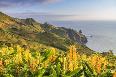 CLKFV94316 Portugal, Azores archipelago, Flores island, Faja Grande