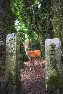 CLKMG92648 Nara, Honshu, Japan