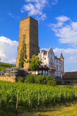 GER11336AWRF Vineyard and Boosemburg Castle, Rudesheim, Rhineland-Palatinate, Germany