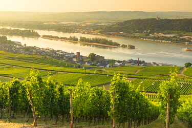 GER11337AWRF Vineyards and River Rhine, Rudesheim, Rhineland-Palatinate, Germany