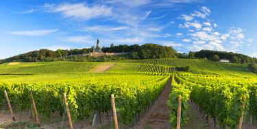 GER11341AWRF Vineyards and Niederwalddenkmal monument, Rudesheim, Rhineland-Palatinate, Germany
