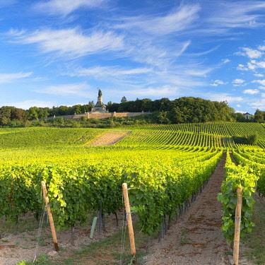 GER11342AWRF Vineyards and Niederwalddenkmal monument, Rudesheim, Rhineland-Palatinate, Germany