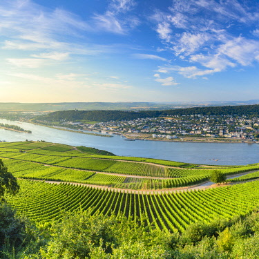 GER11344AWRF View of Bingen, vineyards and River Rhine, Rudesheim, Rhineland-Palatinate, Germany