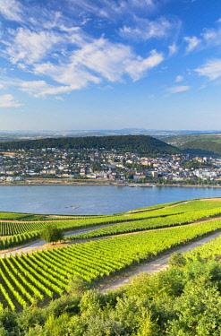 GER11345AWRF Vineyards and River Rhine, Rudesheim, Rhineland-Palatinate, Germany