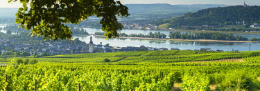 GER11069AW View over vineyards, Rudesheim, Rhineland-Palatinate, Germany