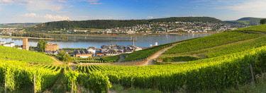 GER11083AW Vineyards and River Rhine, Rudesheim, Rhineland-Palatinate, Germany