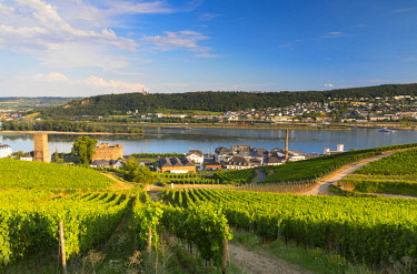 GER11085AW Vineyards and River Rhine, Rudesheim, Rhineland-Palatinate, Germany