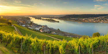 GER11091AW Vineyards and River Rhine at sunrise, Rudesheim, Rhineland-Palatinate, Germany