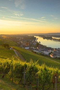 GER11093AW Vineyards and River Rhine at sunrise, Rudesheim, Rhineland-Palatinate, Germany