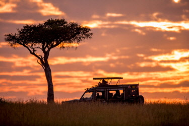 KEN11331 Sand River Masai Mara, Kenya, Elewana Collection, guests look out of a safari vehicle at sunset