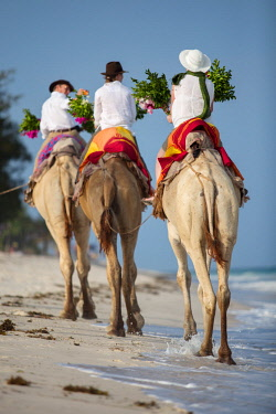 KEN11359 Kenya, Diani, Diani Beach, AfroChic, tourists ride camels along the beach.