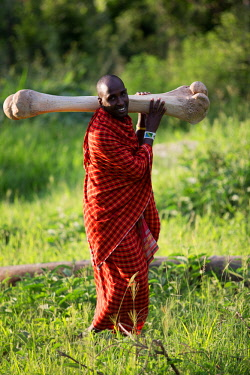 TZ3761 Tarangire Treetops, Tanzania, Elewana Collection, a Maasai holds a huge elephant bone aloft for us to see.