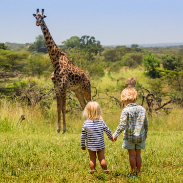 TZ3881 Tanzania, Serengeti, Migration Camp, Elewana, a habituated giraffe watches two children cautiously approach.