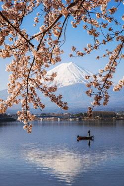JAP1470AWRF Mount Fuji in springtime with cherry tree in full bloom, Fuji Five Lakes, Japan