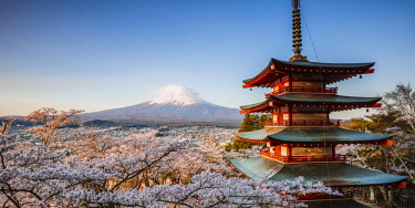 JAP1441AW Iconic Chureito pagoda during cherry blossom season with mt. Fuji, Fuji Five lakes, Japan