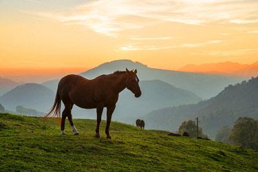SWI8141AW Horses near Belchenflue, Solothurn, Switzerland
