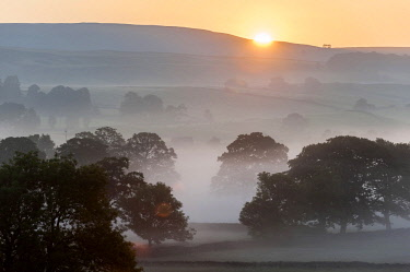 ENG15875 England, Yorkshire Dales, Wensleydale, Sunrise over fields and barns