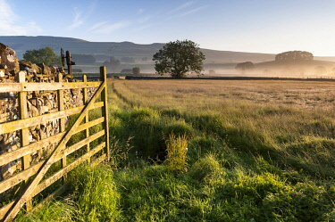 ENG15885 England, Yorkshire Dales, Wensleydale, Sunrise over fields and barns