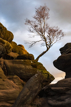 ENG15895 England, Yorkshire Dales, Nidderdale, Brimham Rocks