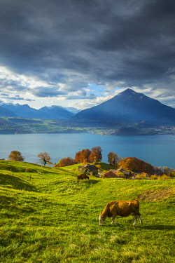 CH143RF Niesen mountain and Lake Thun, Berner Oberland, Switzerland