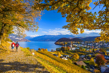 CH02488 Spiez Castle and vineyards, Berner Oberland, Switzerland