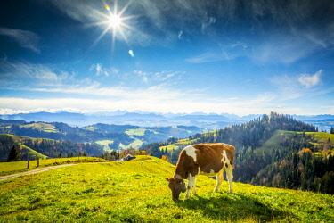 CH02505 Emmental Valley, Berner Oberland, Switzerland
