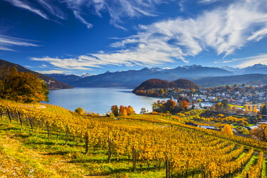 CH02545 Spiez Castle and vineyards, Berner Oberland, Switzerland