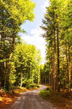 FRA10806 France, Occitanie, La Salvetat sur Agout region. Trees in the forest of the region of La Salvetat sur Agout in Occitanie on the trail of the Via Tolosana towards Santiago de Compostela.
