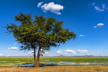 TZ4018AW Africa, Tanzania, Tarangire National Park. Landscape with a lone tree and a swamp.