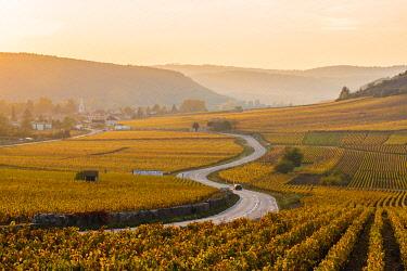 FRA10944AW France, Bourgogne-Franche-Comte, Burgundy, Cote-d'Or, Cote de Beaune vineyards.