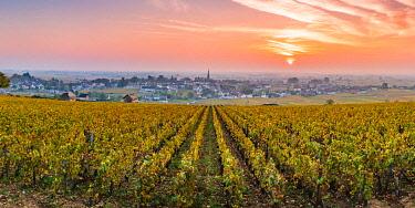 FRA11009AW France, Bourgogne-Franche-Comte, Burgundy, Cote-d'Or, Meursault.