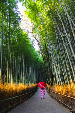 JAP1485AW Arashiyama, Kyoto, Kyoto prefecture, Kansai region, Japan. Woman in traditional kimono walking in the bamboo grove at sunrise (MR).