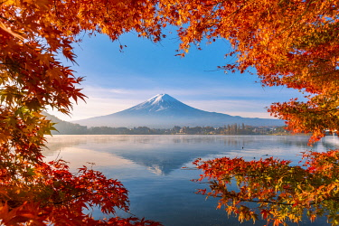 JAP1525AW Lake Kawaguchi and Mt Fuji framed by red maple leaves in autumn, Yamanashi Prefecture, Japan.