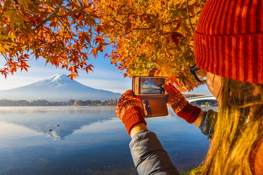 JAP1528AW Lake Kawaguchi and Mt Fuji, Yamanashi Prefecture, Japan. Tourist photographing the autumn leaves with her smartphone.