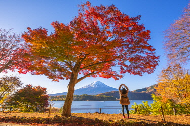 Fuji Five Lakes, Yamanashi Prefecture, Japan. Tourist photographing a maple tree and Mt Fuji in autumn. (MR)