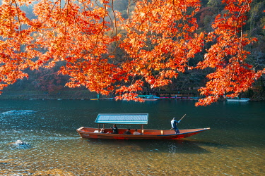 JAP1537AW Kyoto, Kyoto prefecture, Kansai region, Japan. Tour boats along the Katsura river in autumn.