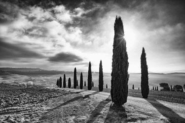 ITA13490AW Italy, Tuscany, Val d'Orcia listed as World Heritage by UNESCO, rows of backlit cypress trees