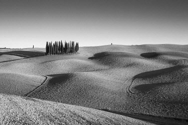 ITA13492AW Italy, Tuscany, Val d'Orcia listed as World Heritage by UNESCO, clump of cypress trees in the autumn in a ploughed field near San Quirico d'Orcia
