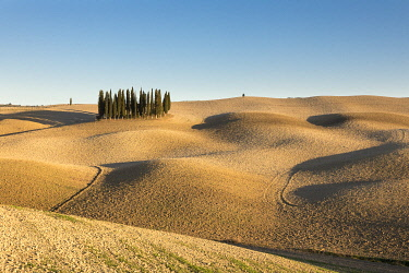 ITA13493AW Italy, Tuscany, Val d'Orcia listed as World Heritage by UNESCO, clump of cypress trees in the autumn in a ploughed field near San Quirico d'Orcia