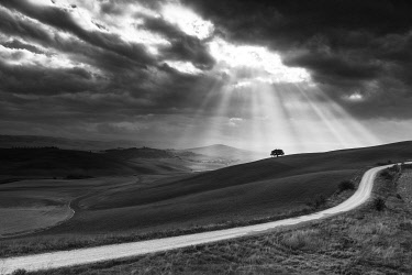 ITA13494AW Italy, Tuscany, Val d'Orcia listed as World Heritage by UNESCO, sun's rays behind solitary tree in the Orcia Valley