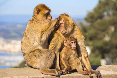 GB01148 Gibraltar, Gibraltar rock,  Gibraltar Barbary Ape