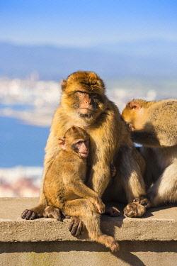 GB01149 Gibraltar, Gibraltar rock,  Gibraltar Barbary Ape