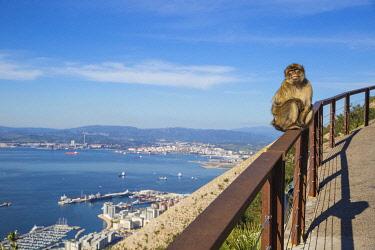 GB01166 Gibraltar, Gibraltar rock,  Gibraltar Barbary Ape