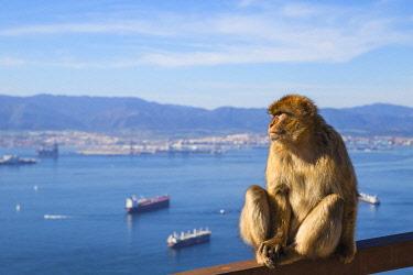 GB01167 Gibraltar, Gibraltar rock,  Gibraltar Barbary Ape