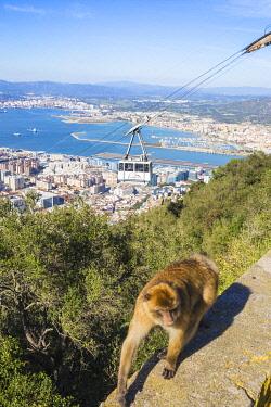 GB01172 Gibraltar, Gibraltar rock,  Gibraltar Barbary Ape