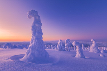 CLKGP92271 Frozen tree, called Tykky, in the snowy woods at Riisitunturi National Park, Posio, Lapland, Finland