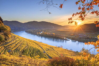 CLKMK98391 Weissenkirchen in der Wachau, Wachau, Waldviertel, district of Krems, Lower Austria, Austria, Europe. Sunrise in the vineyards near Weissenkirchen in der Wachau, view to the Danube river and the villa...
